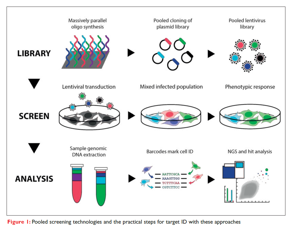 Figure 1 Pooled screening technologies and the practical steps for target ID