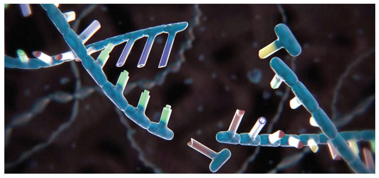 Image 1 DNA Strand Broken