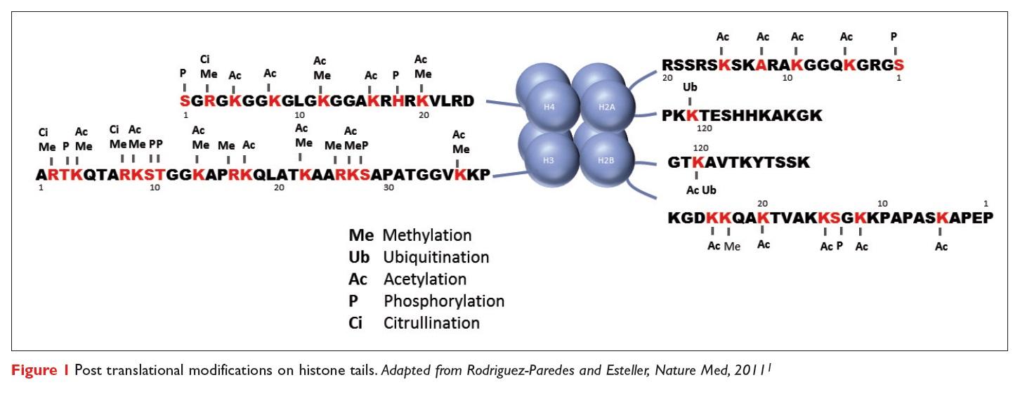 Figure 1 Post translational modifications on histone tails