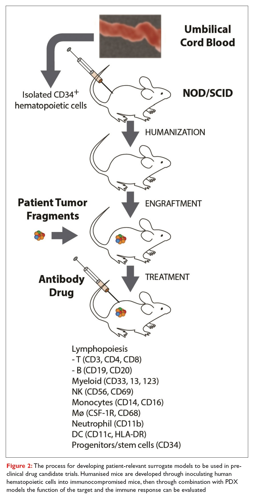Figure 2 The process for developing patient-relevant surrogate models to be used in pre-clinical drug candidate trials