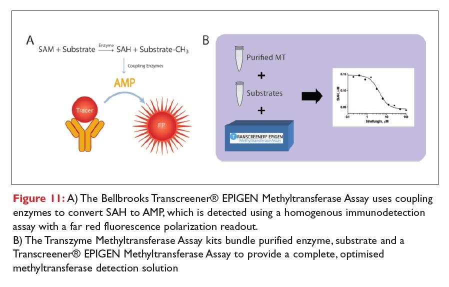 Figure 11 The Bellbrooks Transcreener EPIGEN Methyltransferase Assay kits