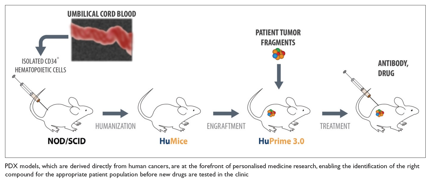 Figure 1 PDX models, which are derived from human cancers