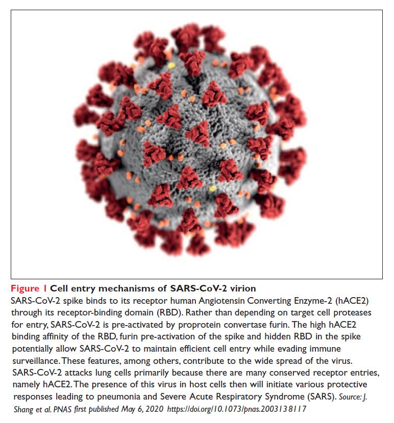 Figure 1 Cell entry mechanisms of SARS-CoV-2 virion