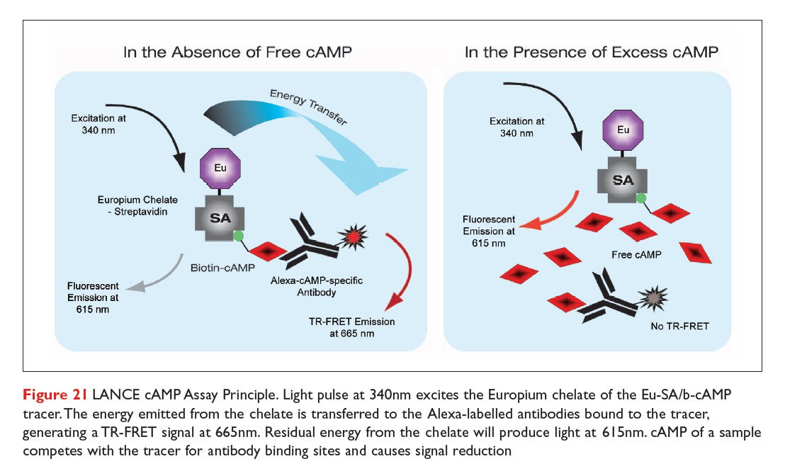 Figure 21 LANCE cAMP Assay Principle