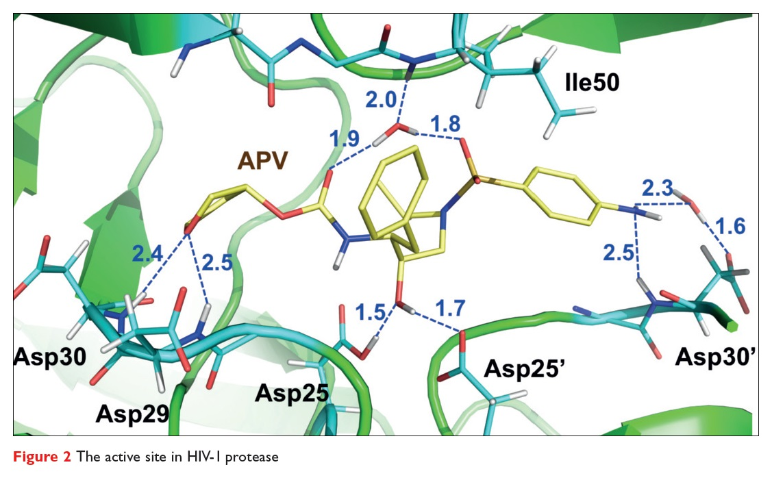Figure 2 The active site in HIV-1 protease