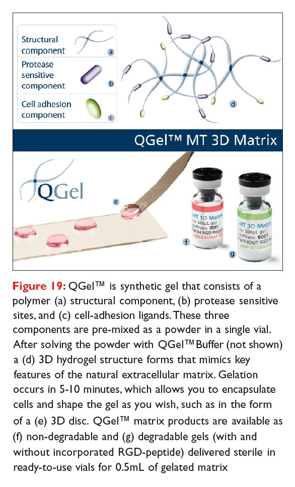 Figure 19 QGel is synthetic gel that consists of a polymer structural component, protease sensitive sites, and cell-adhesion ligands
