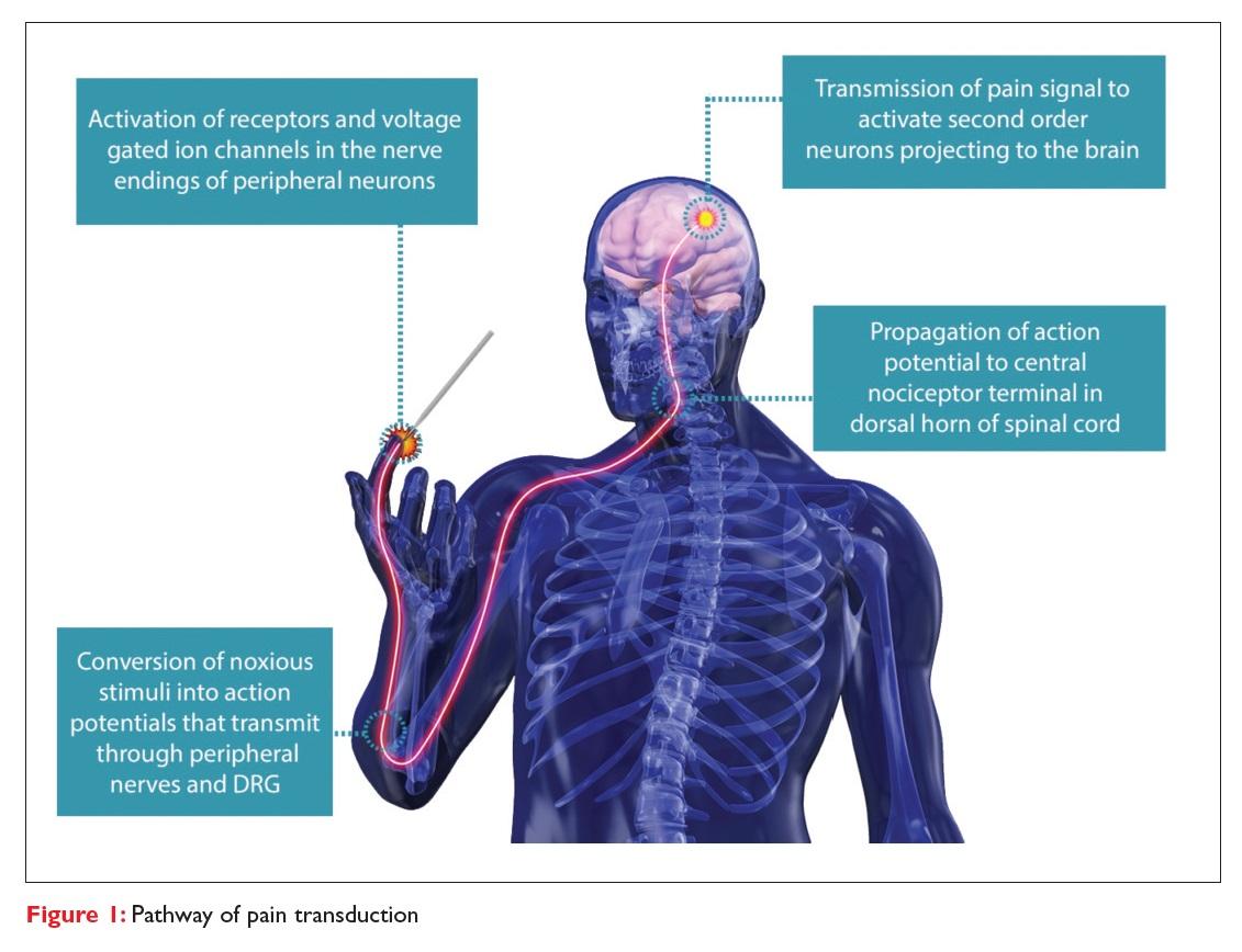 Figure 1 Pathway of pain transduction diagram
