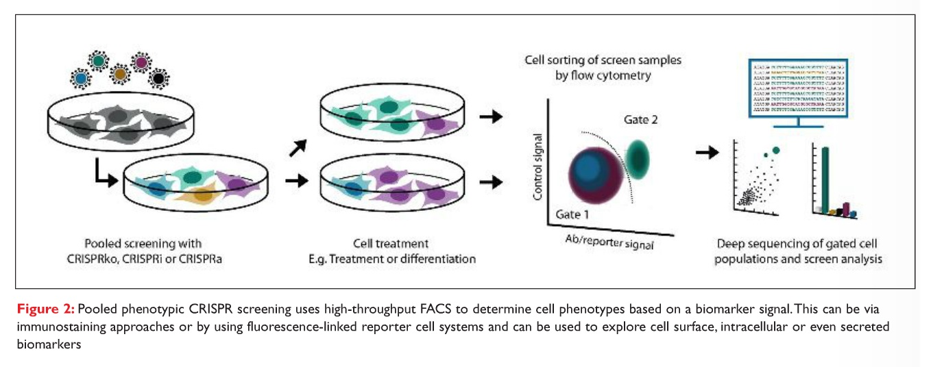 Figure 2 Pooled phenotypic CRISPR screening uses high-throughput FACS to determine cell phenotypes based on a biomarker signal