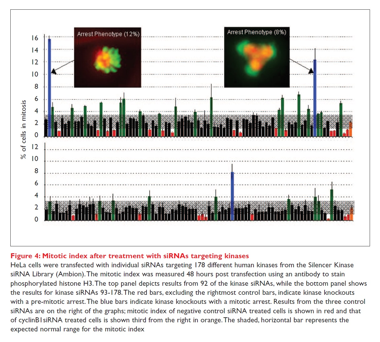 Figure 4 Mitotic index after treatment with siRNAs targeting kinases