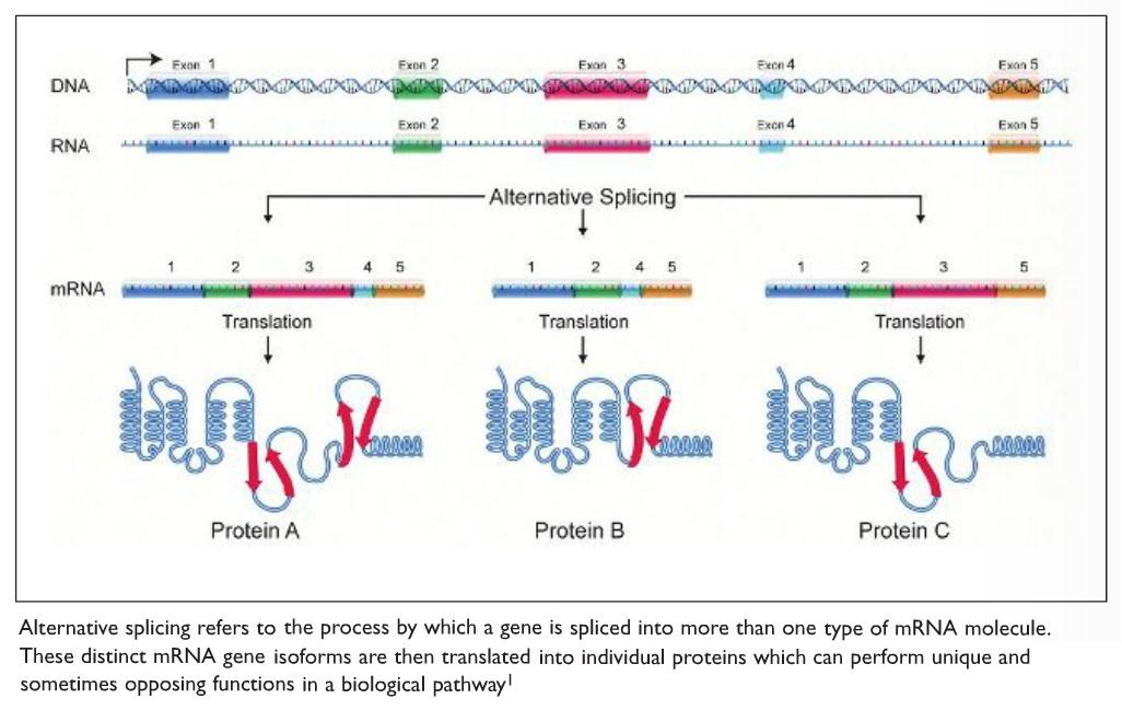 Image 1 Alternative splicing diagram