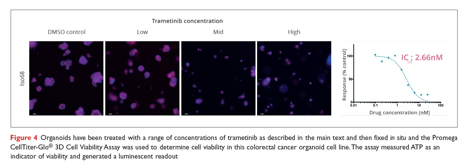 Figure 4 Organoids have been treated with a range of concentrations of trametinib and then fixed in situ