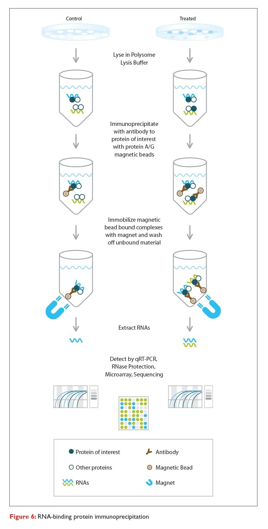 Figure 6 RNA-binding protein immunoprecipitation