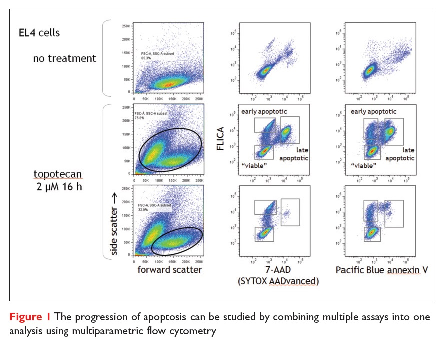 Figure 1 The progression of apoptosis can be studied by combining multiple assays into one analysis using multiparametric flow cytometry