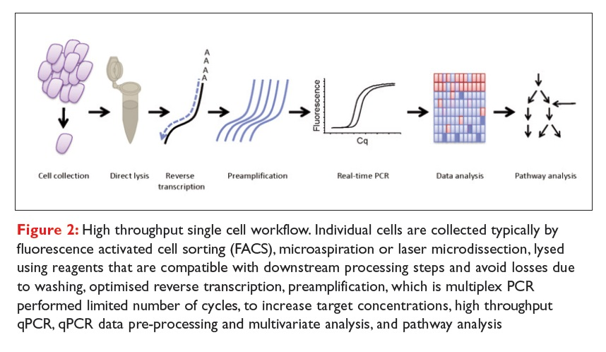 Figure 2 High throughput single cell workflow. Individual cells are collected typically by FACS, microaspiration or laser microdissection