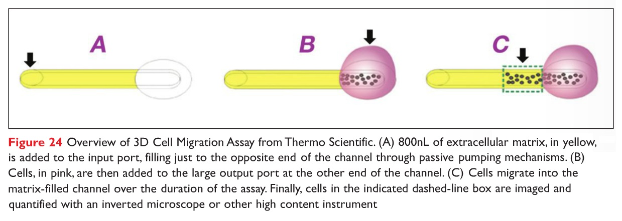 Figure 24 Overview of 3D Cell Migration Assay from Thermo Scientific