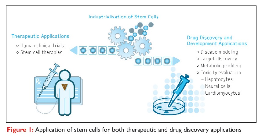Figure 1 Application of stem cells for both therapeutic and drug discovery applications