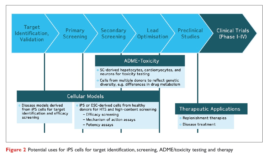 Figure 2 Potential uses for iPS cells for target identification, screening, ADME/toxicity testing and + therapy
