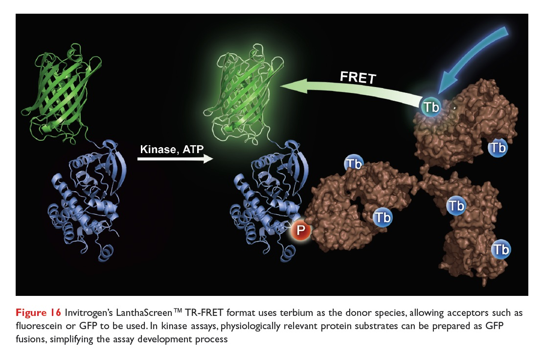 Figure 16 Invitrogen's LanthaScreen TR-FRET format uses terbium as the donor species, allowing acceptors such as fluorescin or GFP to be used