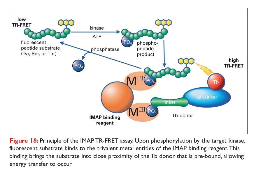 Figure 18 Principle of the IMAP TR-FRET assay