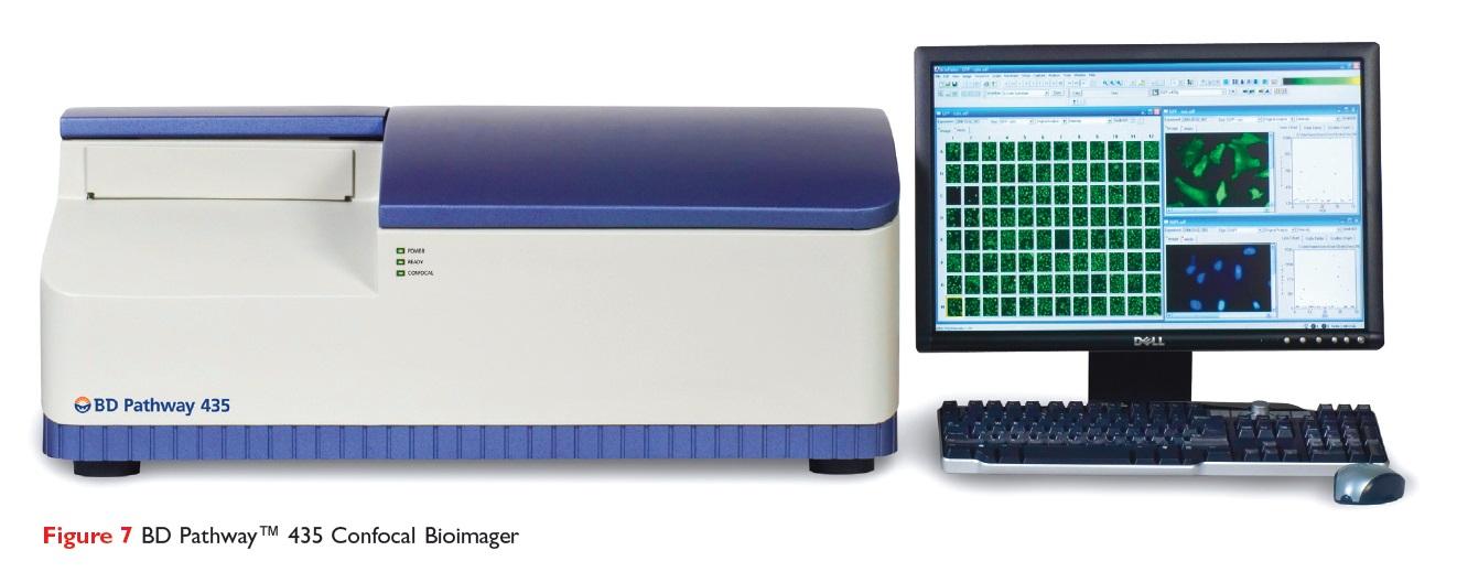 Figure 7 BD Pathway 435 Confocal Bioimager