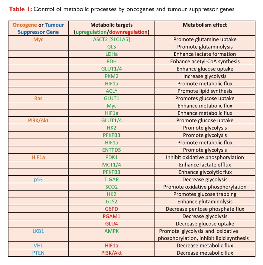 Table 1 Control of metabolic processes by oncogenes and tumour suppressor genes