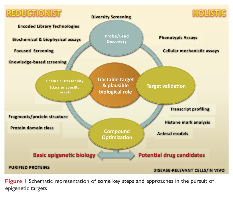 Figure 1 Schematic representation of some key steps and approaches in the pursuit of epigenetic targets