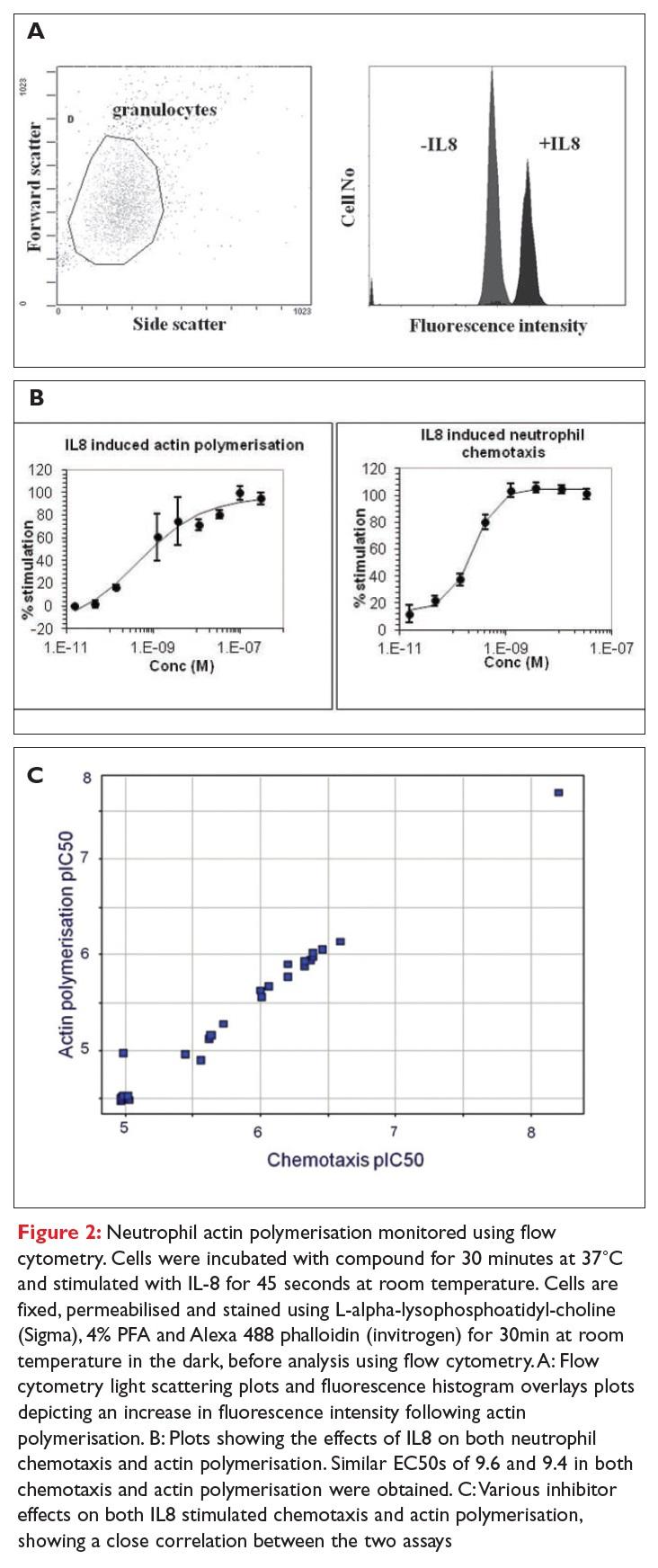 Figure 2 Neutrophil actin polymerisation monitored using flow cytometry