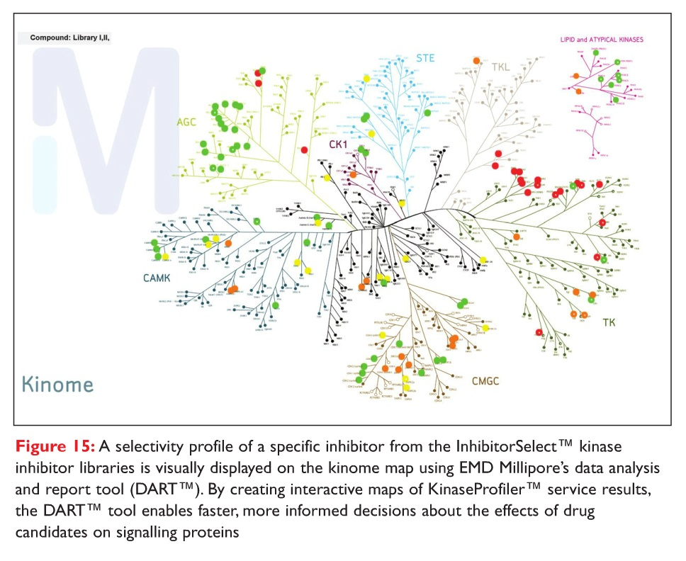 Figure 15 A selectivity profile of a specific inhibitor from the InhibitorSelect kinase inhibitor libraries visually displayed on the kinome map