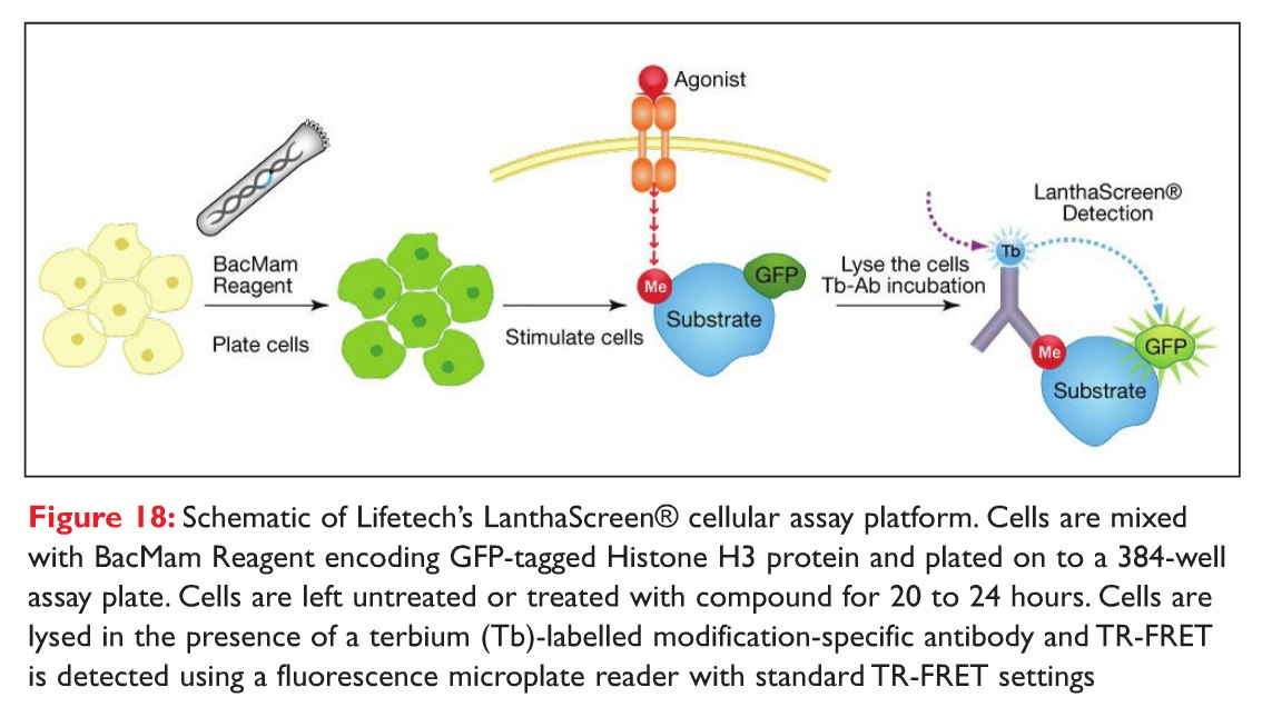 Figure 18 Schematic of Lifetech's LanthaScreen cellular assay platform