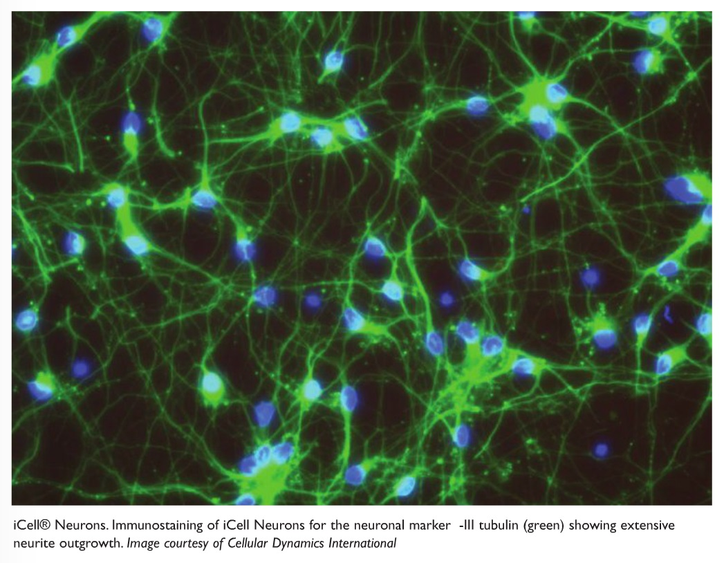 Figure 2 iCell Neurons