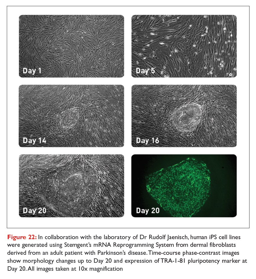 Figure 22 In collaboration with the laboratory of Dr Rudolf Jaenisch, human iPS cell lines were generated using Stemgent's mRNA Reprogramming System