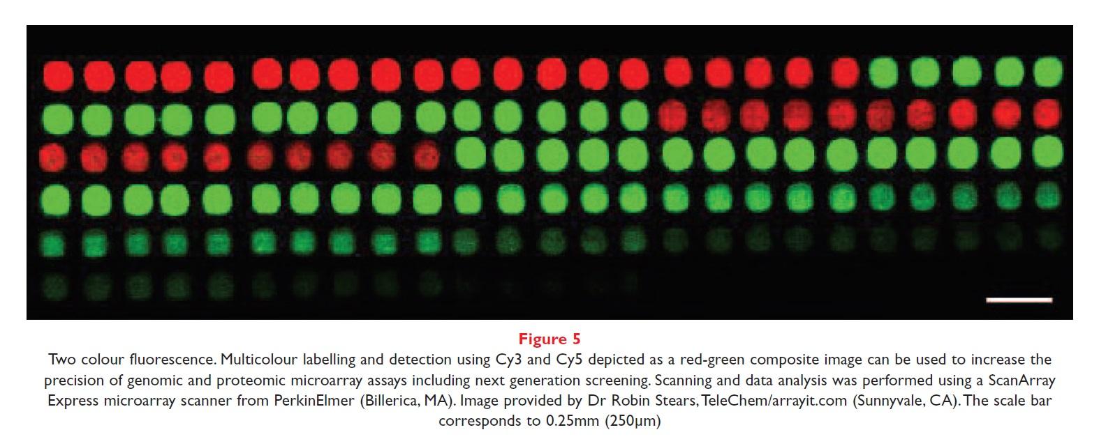 Figure 5 Two colour fluorescence