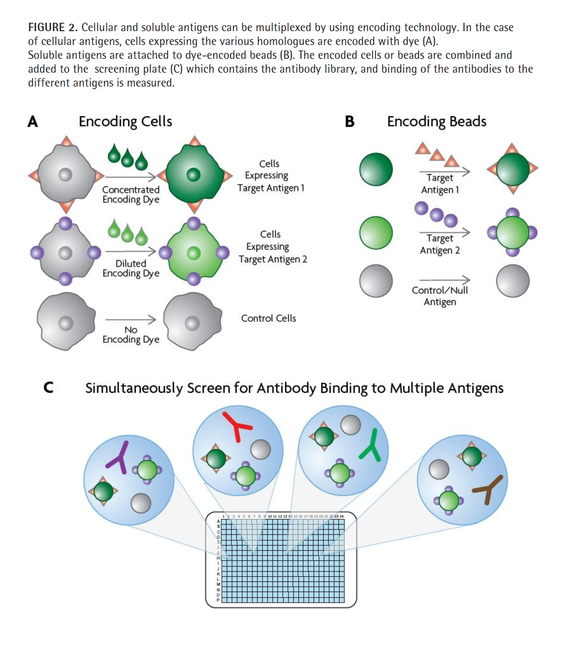 Figure 2 Cellular and soluble antigens can be multiplexed by using encoding technology