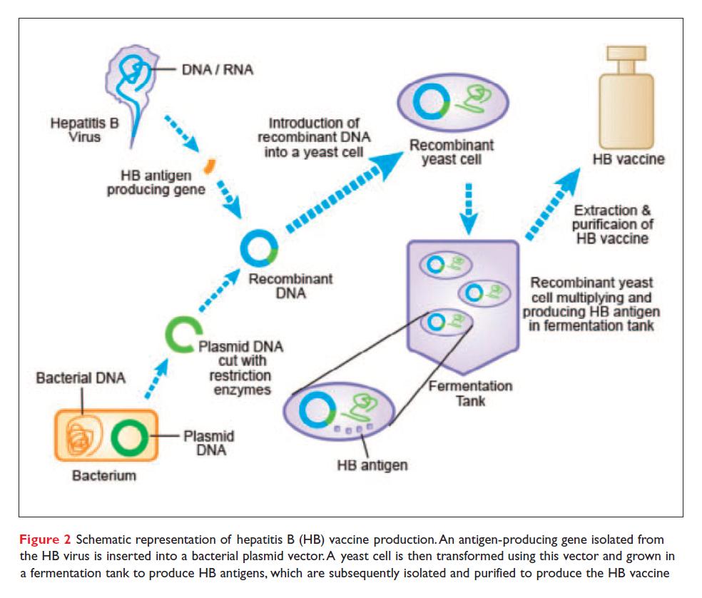 Figure 2 Schematic representation of hepatitis B vaccine production