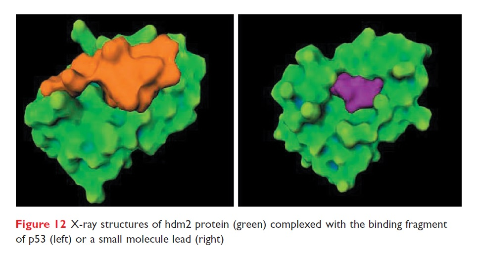 Figure 12 X-ray structures of hdm2 protein complexed with the binding fragment of p53 or a small molecule lead