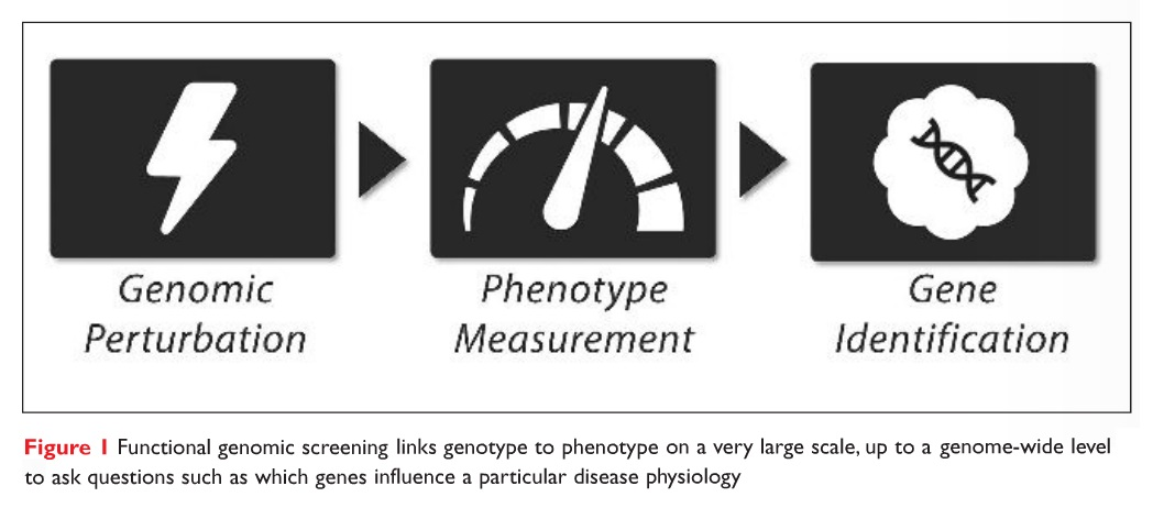 Figure 1 Functional genomic screening links genotype to phenotype on a very large scale