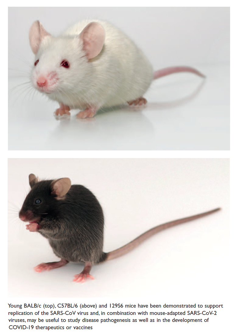 Figure 1 Young BALB/c, C57BL/6 and 129S6 mice