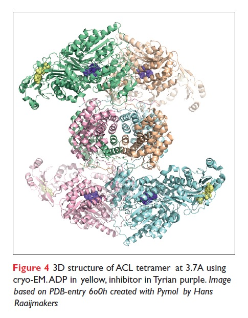 Figure 4 3D structure of ACL tetramer at 3.7A using cryo-EM