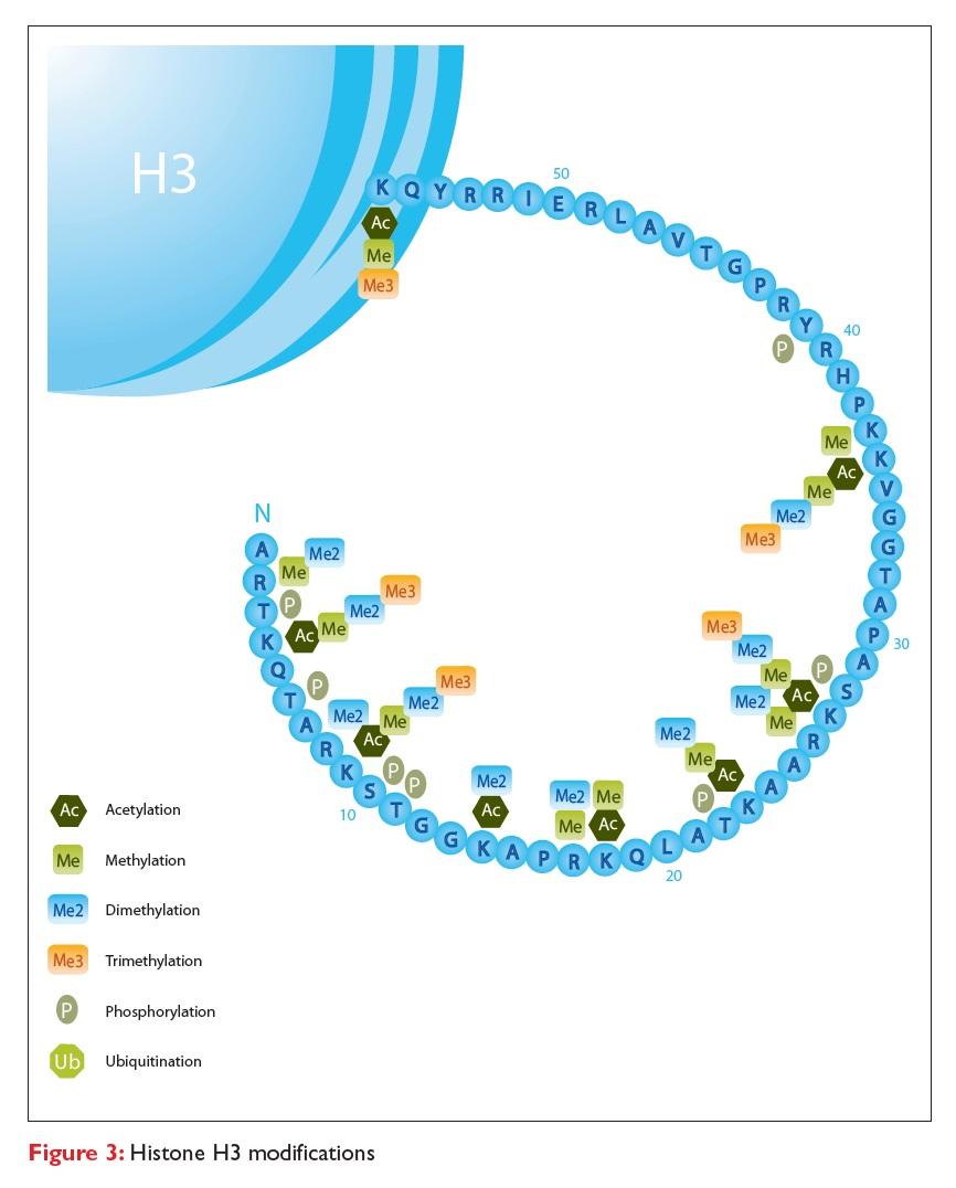 Figure 3 Histone H3 modifications