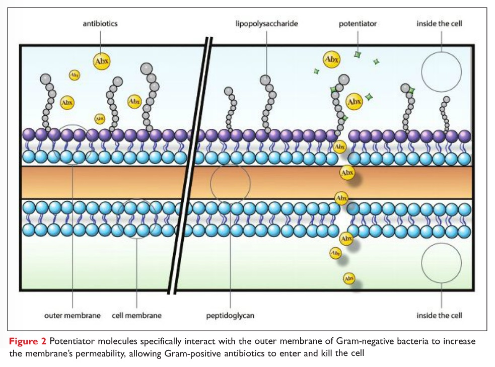 Figure 2 Potentiator molecules specifically interact with the outer membrane of Gram-negative bacteria