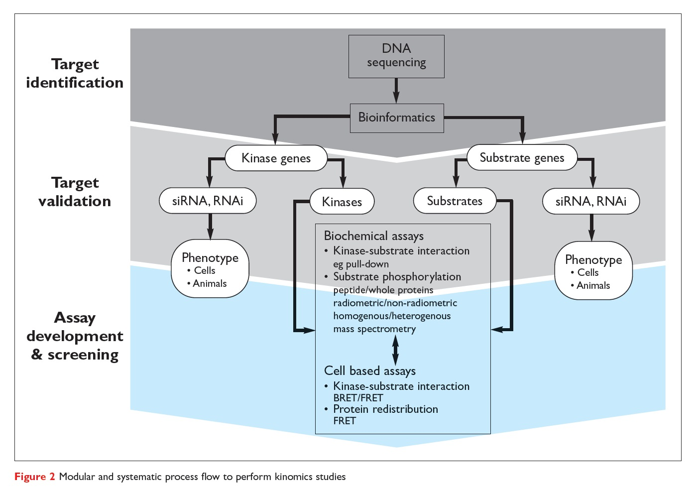 Figure 2 Modular and systematic process flow to perform kinomics studies