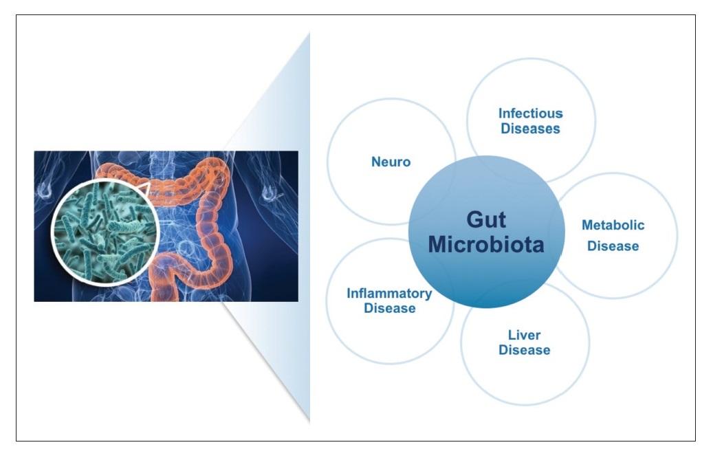 The Human Microbiome and drug discovery, gut microbiota illustration