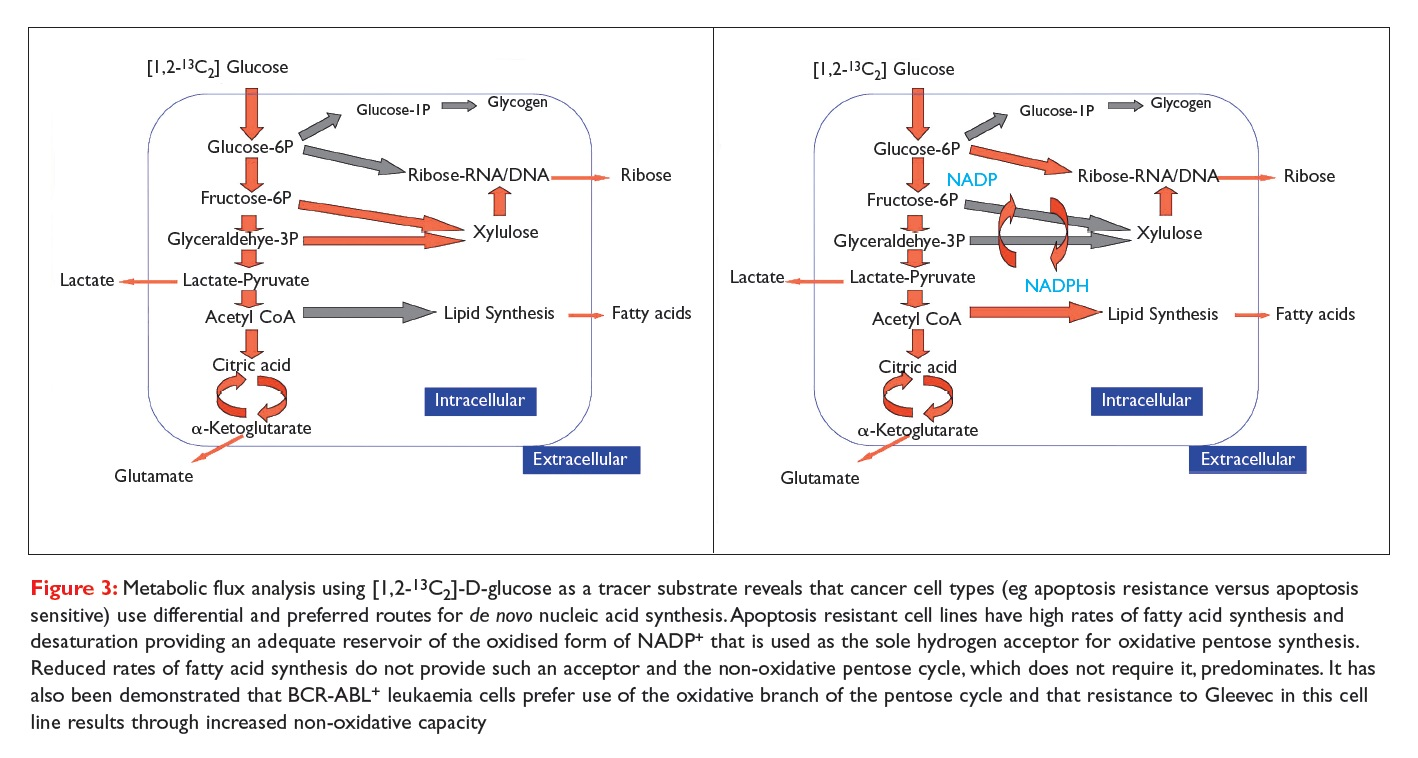 Figure 3 Metabolic flux analysis using D-glucose as a tracer substrate reveals that cancer cell types use differential and preferred routes