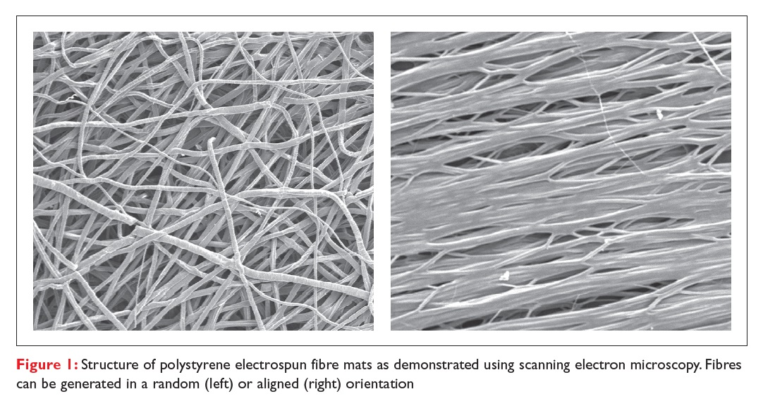 Figure 1 Structure of polystyrene electrospun fibre mats as demonstrated using scanning electron microscopy