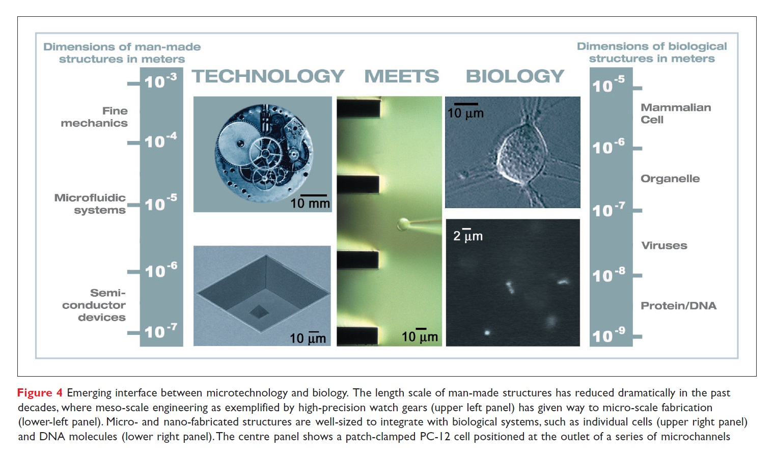 Figure 4 Emerging interface between microtechnology and biology