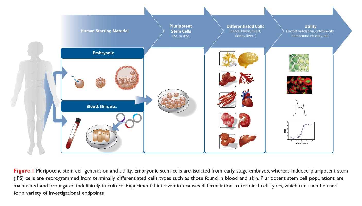 Figure 1 Pluripotent stem cell generation and utility. Embryonic stem cells are isolated from early stage embryos