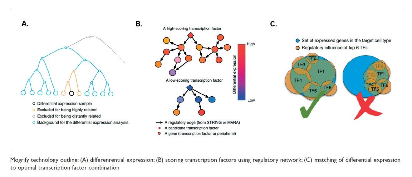 Figure 3 Mogrify technology outline