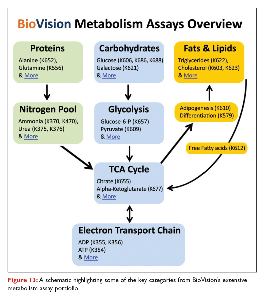 Figure 13 A schematic highlighting some of the key categories from BioVision's extensive metabolism assay portfolio