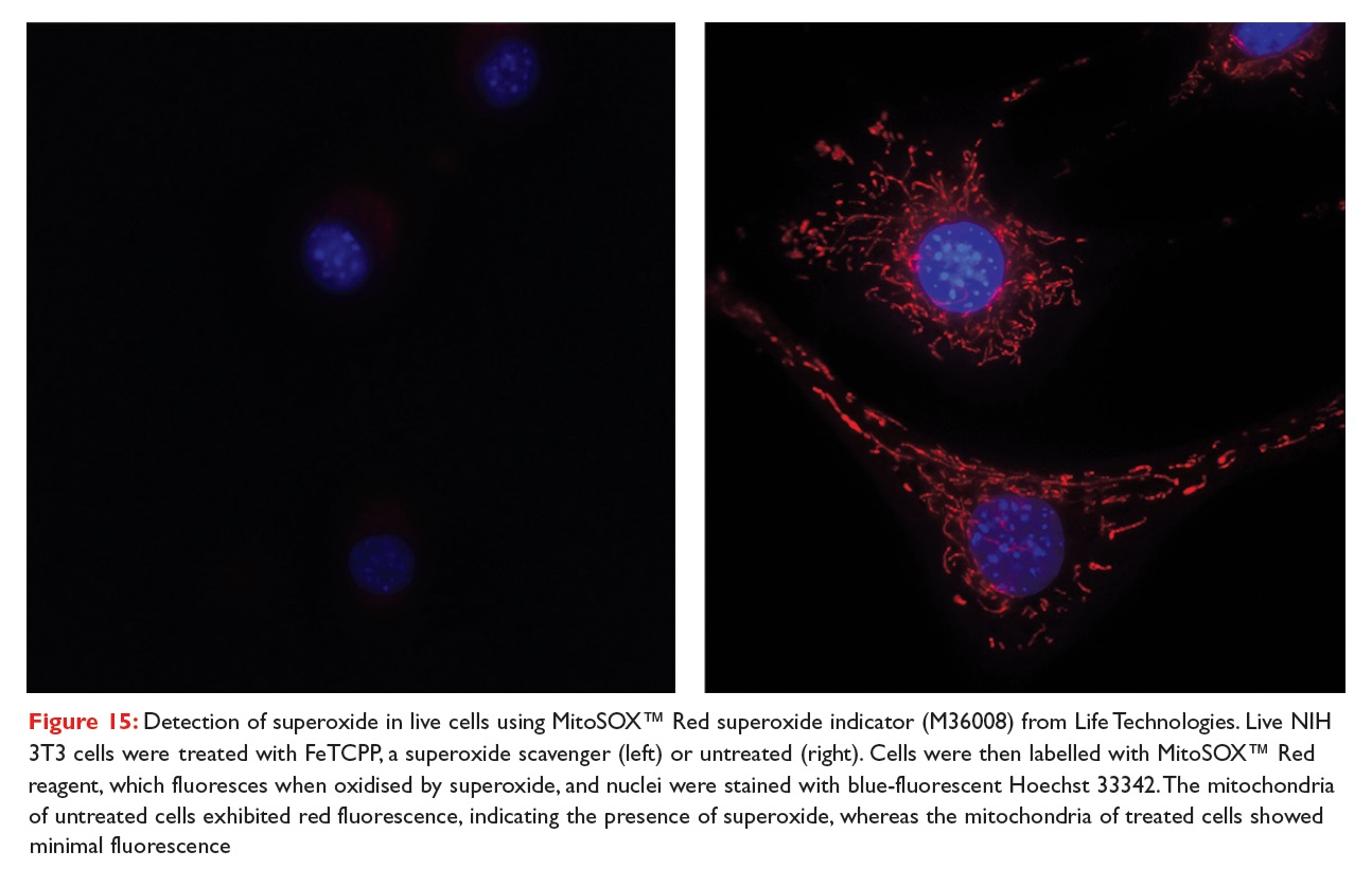 Figure 15 Detection of superoxide in live cells using MitoSOX Red superoxide indicator (M36008) from Life Technologies