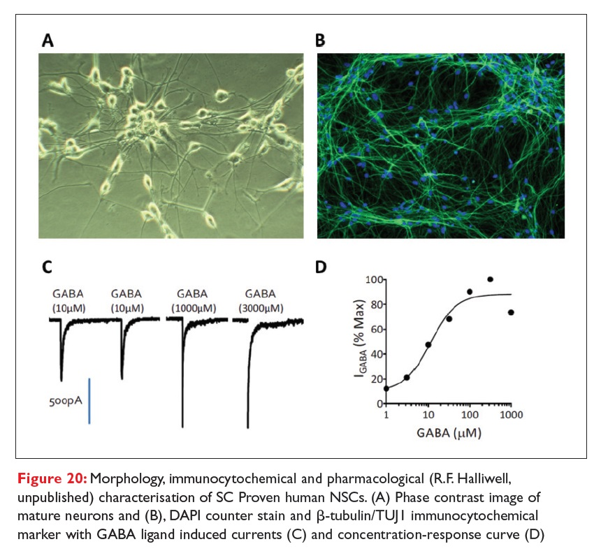 Figure 20 Morphology, immunocytochemical and pharmacological characterisation of SC Proven human NSCs